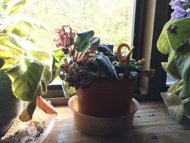 quiz-violet