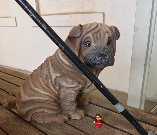 gilbert-dog